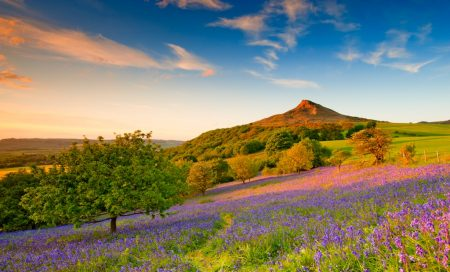 Roseberry Topping and the bluebells